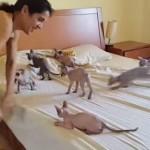 ベッドメイキングを邪魔する猫!
