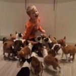 バセンジー犬の子犬16匹との生活!