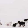 子猫たち、子犬たちに出会う