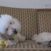 オヤツを横取りする犬