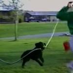 これはおもろい!逃げるお父さんにホースで水をかける犬!