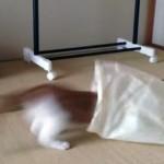 コンビニ袋で猫を捕まえる方法!