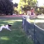 ネットフェンスを前方回転で越えていく犬