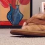 スリッパの履き方が変な猫