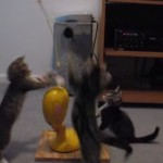 4匹の猫、回るおもちゃで跳ねまくる!