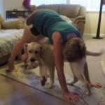 ヨガを邪魔する犬