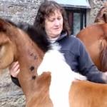 馬の模様がある馬