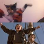 子猫でタイタニック!映画の名シーンをネコで再現!
