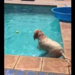 これは凄い!プールのボールを取りたい犬、驚きの方法でゲット!