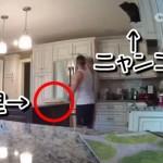 猫が夕食の上にダイブ!料理が台無しでうなだれる男!