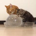 大きな氷のボールを楽しむ10匹の猫
