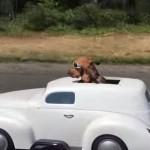 乗り心地に満足する犬