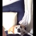 自撮りでポーズをキメる犬