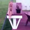 面白すぎ!人間みたいにテーブルに座る猫!