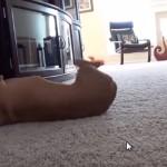 「バン!」と言ったら倒れる犬、最終進化系(笑)