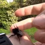蜂さん復活!脱水で弱ったハチさんにハチミツあげた!