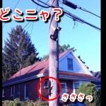 こりゃ面白い!猫に追われたリス、電柱を狡猾に逃げ回る!