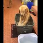 超幸せそう!ゴミ箱のお風呂を楽しむ犬!