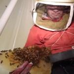 家の壁の中から50000匹のミツバチを救出!