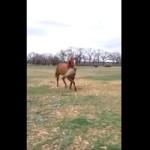 なんだか可愛い!メス馬に干草をプレゼントするオス馬!