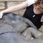 少女の膝で眠るゾウさんの赤ちゃん