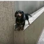 狭い道を戻る犬