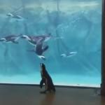 水族館のペンギンを観るペンギン
