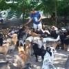 450匹の犬と暮らす男!