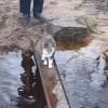 肉球を濡らさないように歩く猫