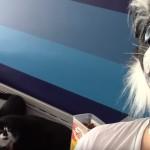 猫マスクをかぶって振り向いたときの猫たちの反応