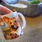 コーギーの絵が描かれたマグカップを怖がるコーギー犬
