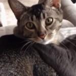 イチャイチャしているのを気づかれた猫カップル