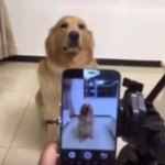 カメラの前で笑顔を作る犬