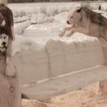 木彫りハスキー犬のベンチを作っていく様子