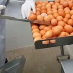 卵を分離!黄身と白身を分ける産業用メカ!