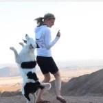 素晴らしい芸をするボーダーコリー犬!アメリカ全土を行く!