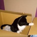 猫がんばった!3ヶ月かけてダンボールをシュレッダーした猫!