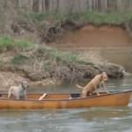 流されるカヌーの上に2匹の犬が!僕が助けるんだワン!