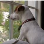 家に帰らなきゃ!愛犬が待つ家に帰りたくなっちゃう動画!