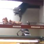 天井からドーナツを盗むアライグマ