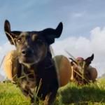 ホットドッグの犬!ダジャレを全力で映像化したハインツの新CM!