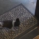 こうでなくては!玄関マットで汚れた足を徹底的に拭く犬!
