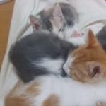 チョー可愛い子猫!一緒に寝てるんだから連れてかないでー!