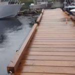 どっぱぁ~ん!小さな桟橋の脇からザトウクジラが!