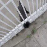 無事救助された猫!フェンスに頭が挟まって抜けられないニャンコ!