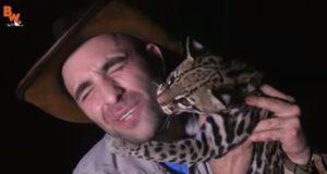 熱帯雨林で野生のオセロットと遭遇!そして友達になる奇跡の夜!
