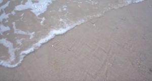 コレ全部が貝!?波が引くと動き出す大量のハマグリ!