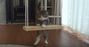 超きゃわわ!猫のまるちゃんがブランコに乗るまで!