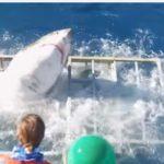 ダイバー危機一髪!ホオジロザメが見学用の海中檻を壊して侵入!