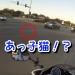 子猫が交差点に瞬間移動?ひかれそうな子猫を女性バイク乗りが救出!